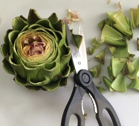 Snipping Artichoke leaves